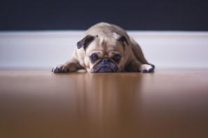 Ziek door hond op de werkvloer