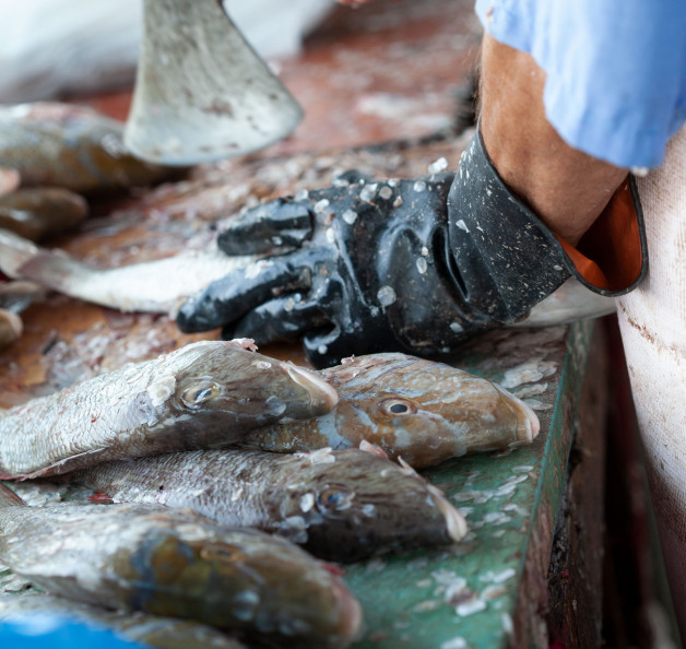 Aantal visverwerkers in Flevoland werken niet eerlijk en onveilig